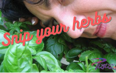 Snip Your Herbs